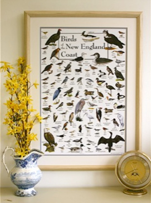 Birds of the New England Coast Poster