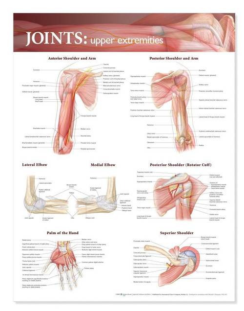 Joints Anatomy Poster, Upper Extremity