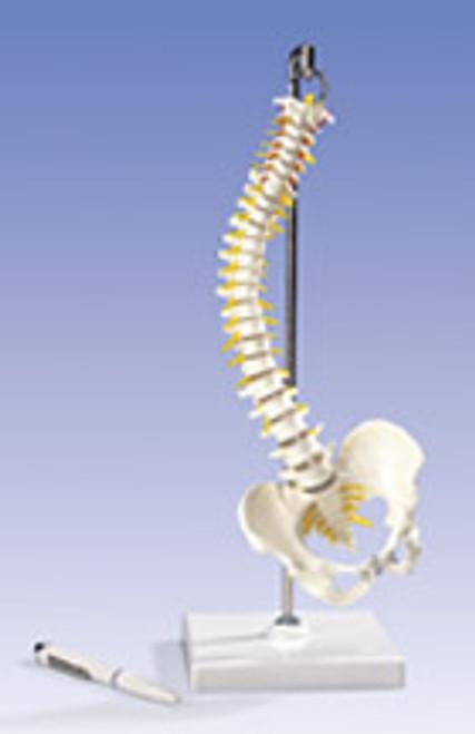 Flexible Mini Spinal Vertebral Column Model
