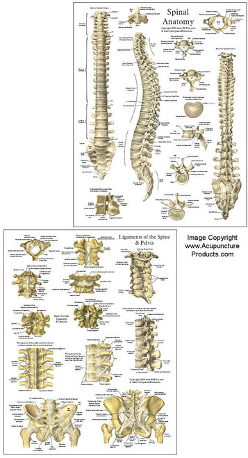 Spinal Reference Chart