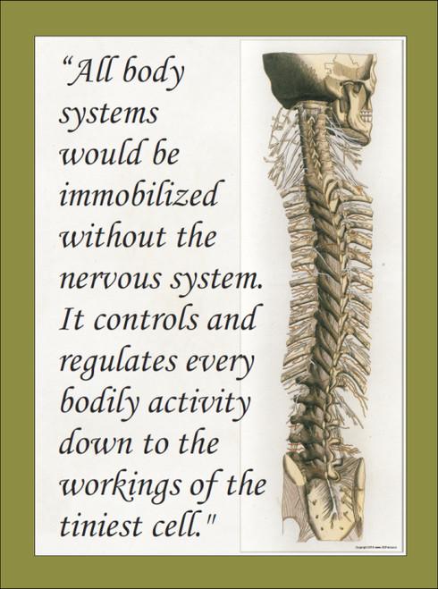 Nervous System Chart
