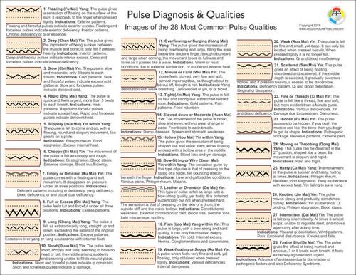 Pulse Diagnosis Chart-Back view
