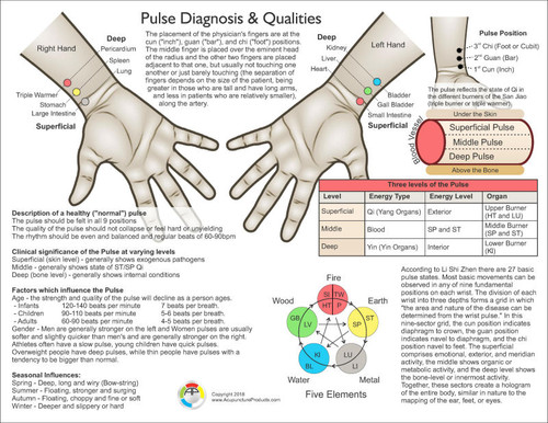 Pulse Diagnosis Chart-Front view