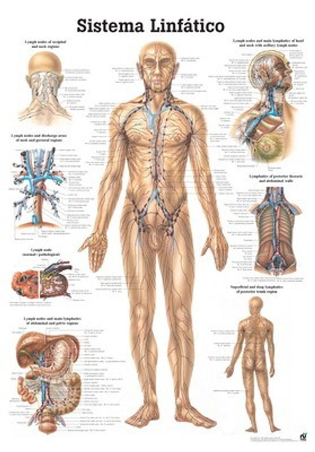 Lymphatic System Poster
