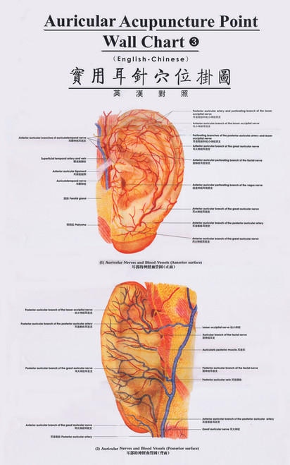 Auricular Acupuncture Point Wall Charts