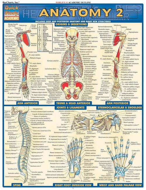 Anatomy 2 (Deep & Posterior) Chart