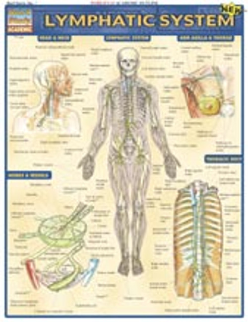 Lymphatic System Anatomy Chart