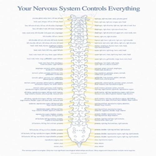 Nerve Insert