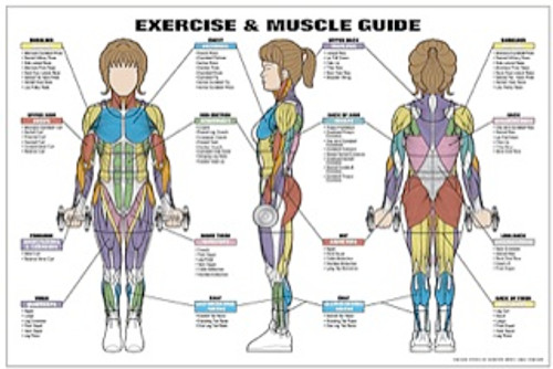 Exercise & Muscle Guide Female Poster