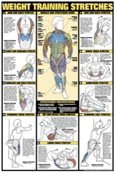 Weight Training Stretchs Poster