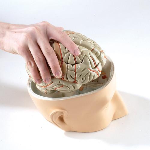 Brain Model-Assembled