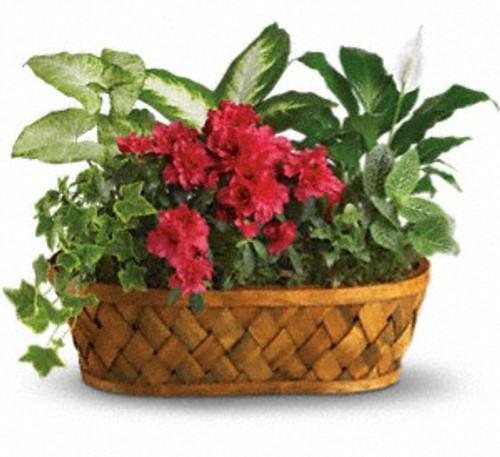 Plants Galore