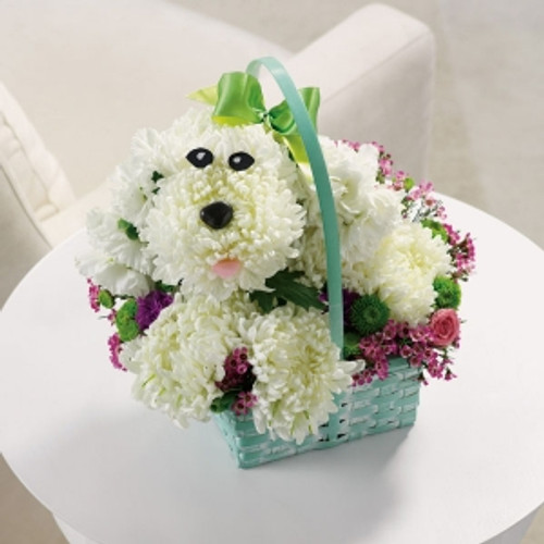 Precious Poodle