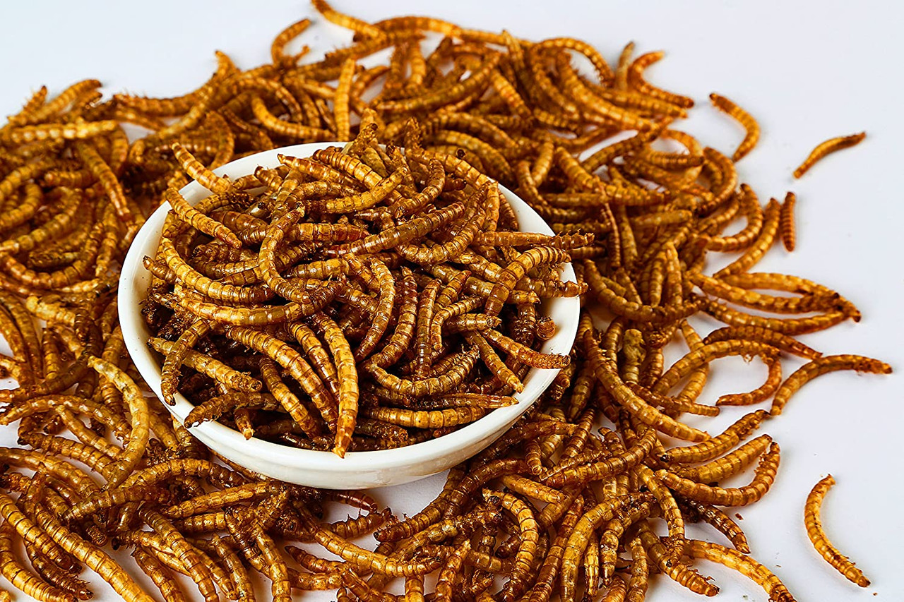 5 lbs Dried Mealworms-High-Protein Mealworms for Wild Bird,Chicken, Ducks,Fish,Reptile, Tortoise, Amphibian,Lizard