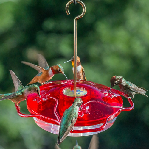 Droll Yankee 4 Hummingbird Feeder Little Flyer Red
