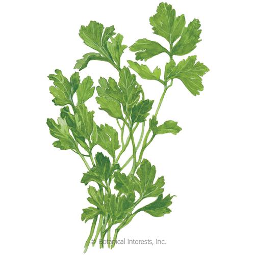 Botanical Interests Parsley Flat Leaf Organic