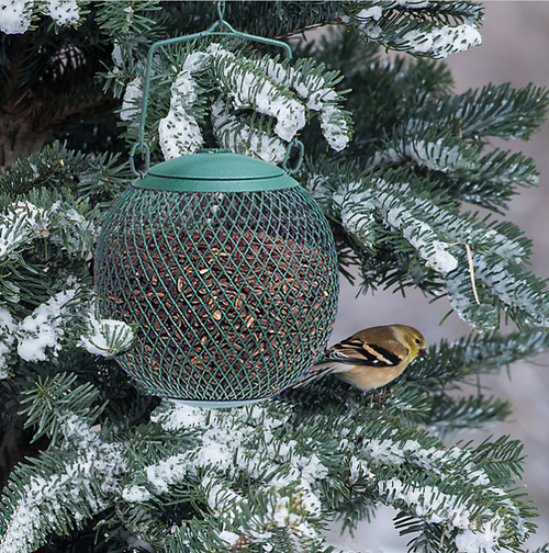 No No Mesh Seed Ball Feeder Green