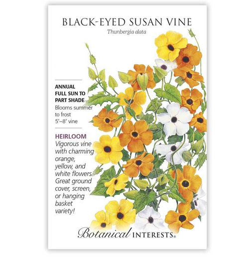 Botanical Interests Black Eyed Susan Vine