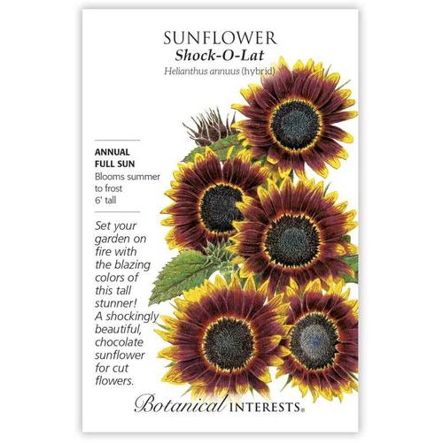 Botanical Interests Sunflower Shock O Lat