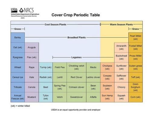 Walnut Creek Crimson Clover Untreated Non-GMO 1#