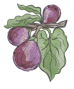 """Figs- Fits into a 4x4"""", 5x7"""" & 6x10"""" Hoop - Instant Downloadable Machine Embroidery"""