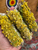 Sage and Mullein Smudge Stick
