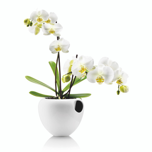 Eva Solo Orchid Pot with Flower