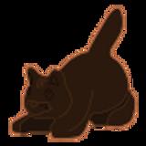 Dark Brown Cat
