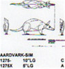 """Aardvark Standing 10"""" Long"""