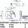 "African Elephant Female Standing with Young 3"" High"
