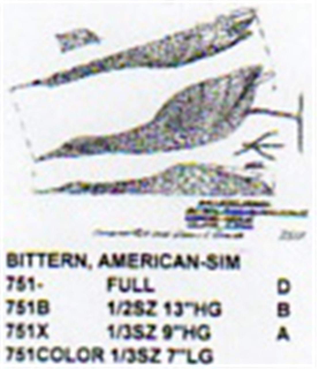 American Bittern Standing/Head Up