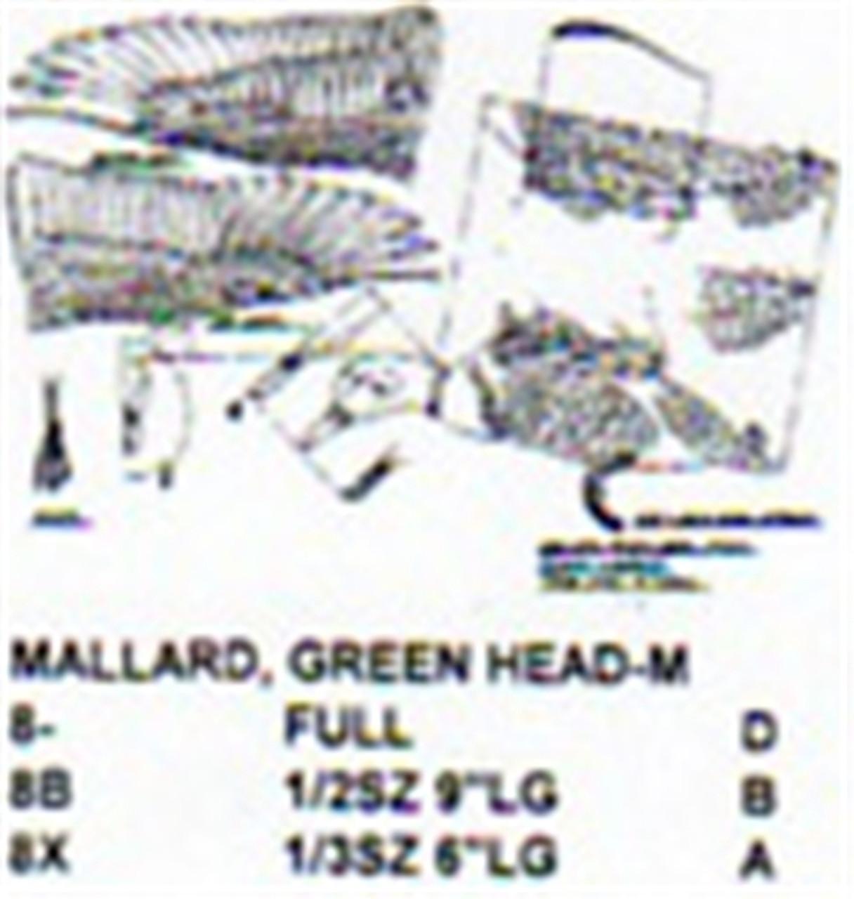 Green Head Mallard Male Flying/Landing
