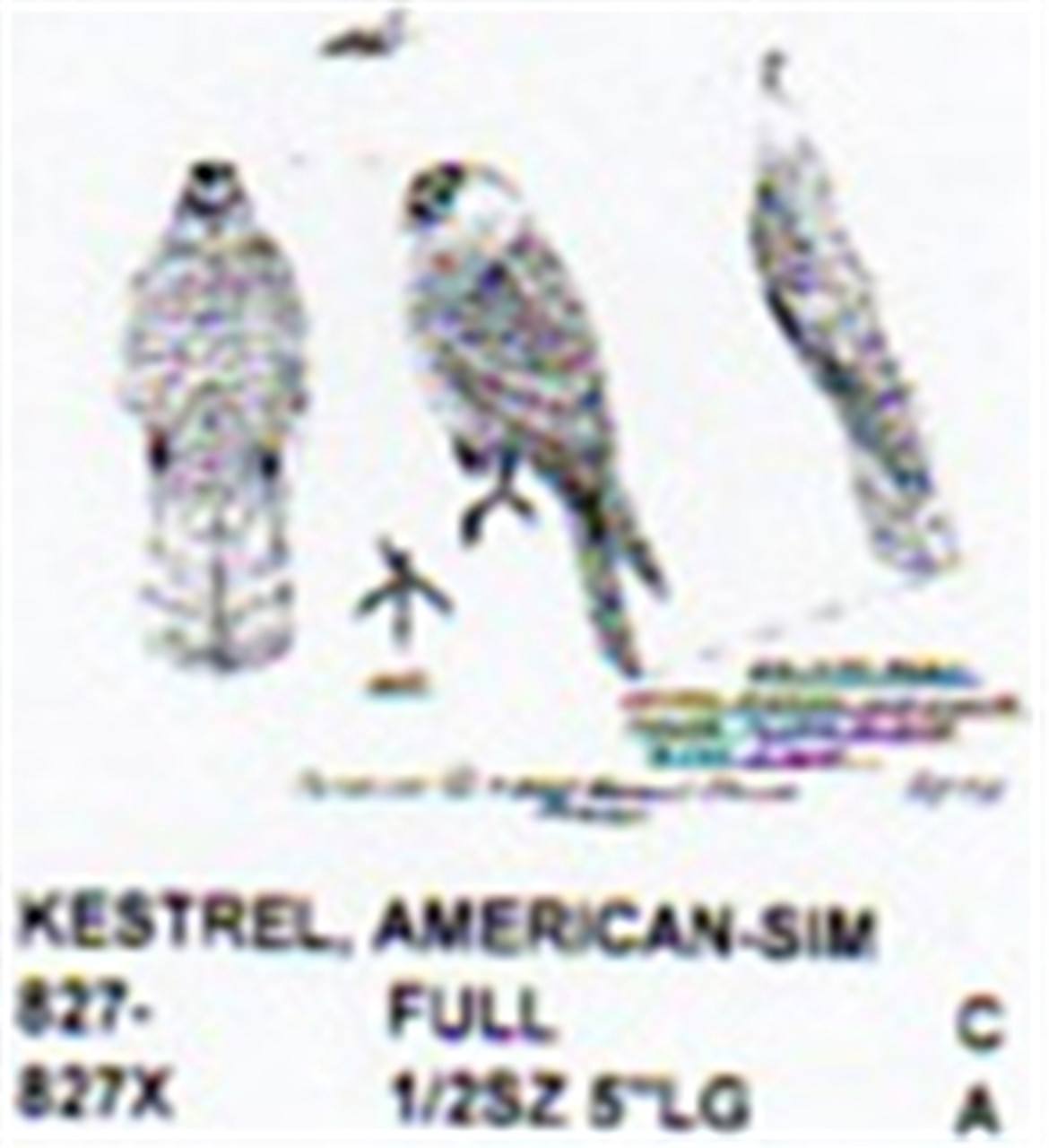American Kestrel Perching/Relaxed Carving Pattern showing the Kestrel in a puffed up relaxed position.