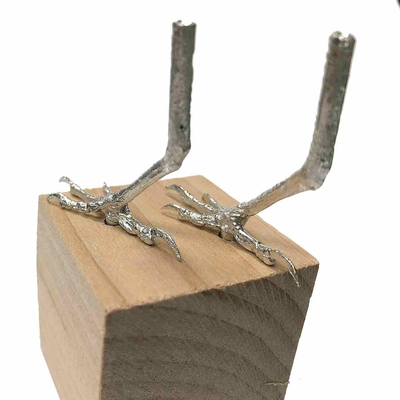 Rear view of the cedar waxwing feet.