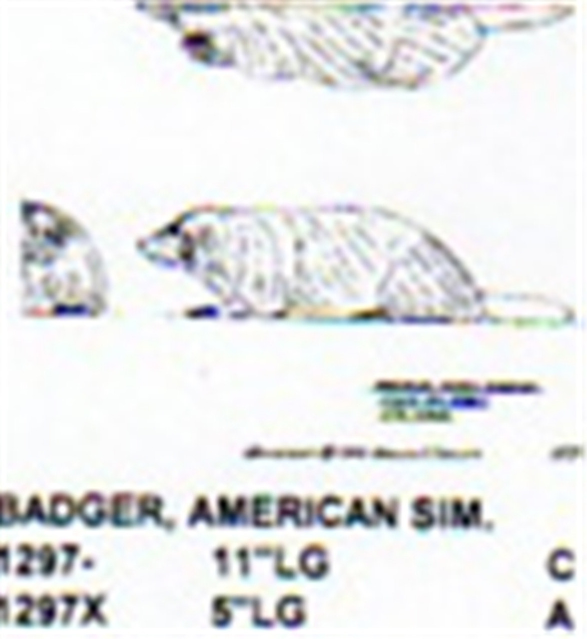 "American Badger Lying Down 11"" Long"
