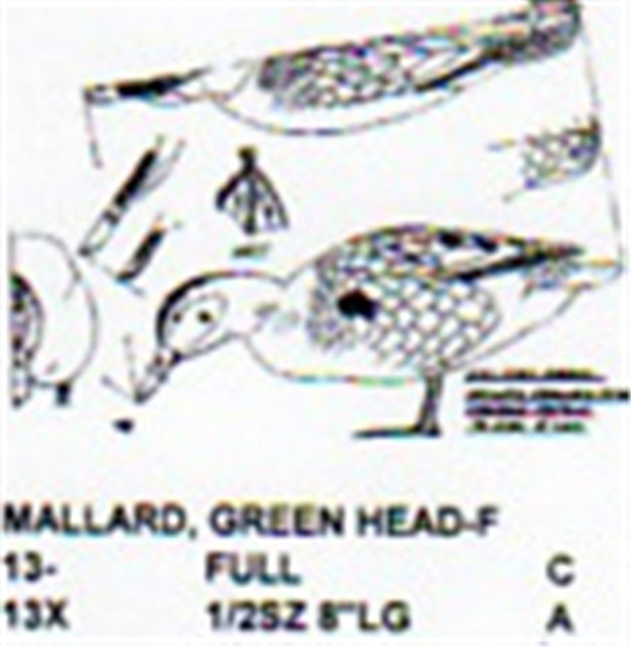 Green Head Mallard Female Standing/Feeding showing the Stiller pattern of a duck standing in the feeding position.