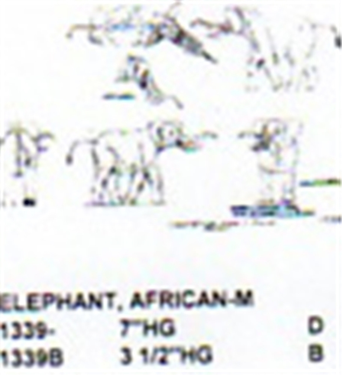 """African Elephant Ready to Charge 3 1/2"""" High"""