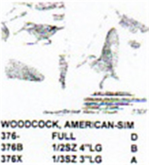 American Woodcock Carving Pattern showing the Stiller patterns of the American Woodcock in two different positions.