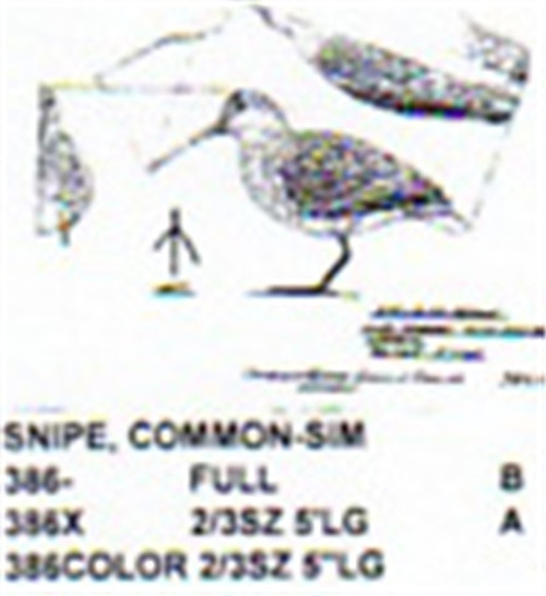 Common Snipe Standing Carving Pattern showing the three different sizes of the Unisex Common Snipe.