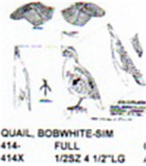 Bobwhite Quail Singing Carving Pattern showing the Quail in a singing position.