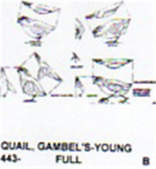 Gambel's Quail Downy Carving Pattern shown in four different positions.