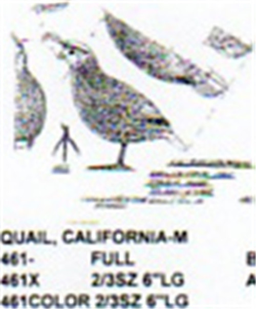 California Quail Male Standing Carving Pattern showing the male Quail in a standing alert position.