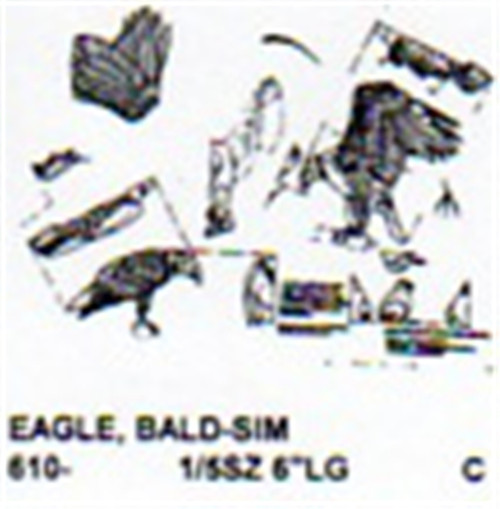 Bald Eagle Family Perching Carving Pattern showing two adult Eagles and a baby chick.