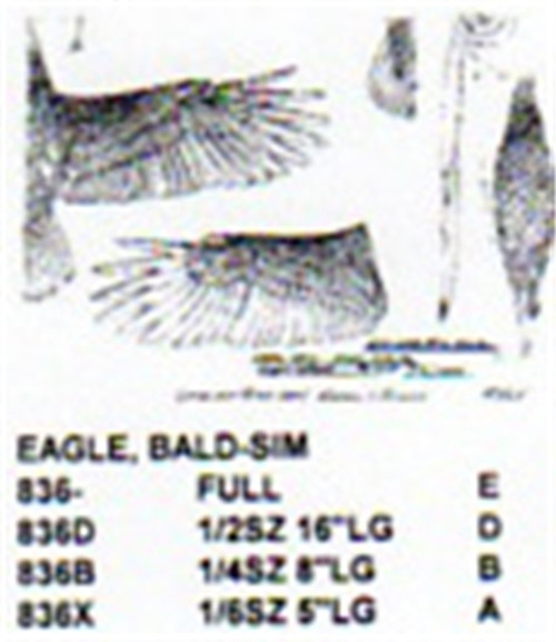 Bald Eagle Flying-Soaring Carving Pattern showing the Eagle with wings out.