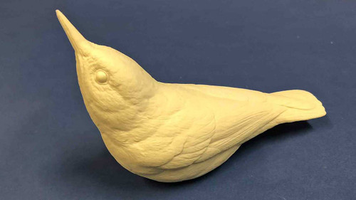 White Breasted Nuthatch Study Cast back side.