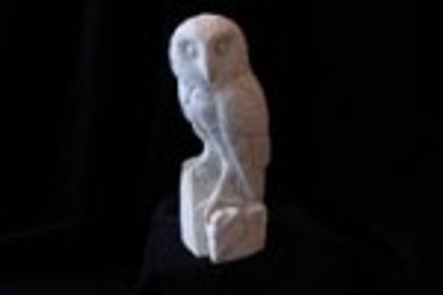 Barn Owl Study Cast.