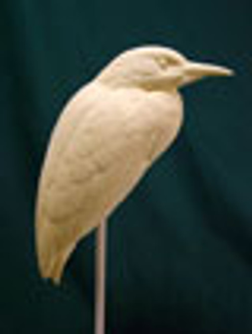 Black Crowned Night Heron Study Cast.