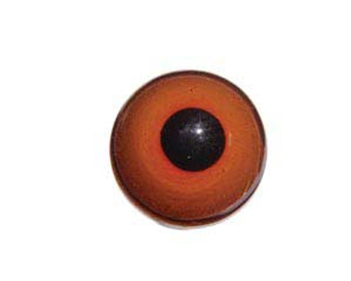 A head on view of the pheasant eye showing the corneal bulge with center pupil in black and swirling reddish orange lens.