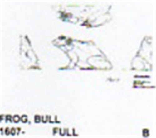 Carving pattern for a bull frog in the sitting position