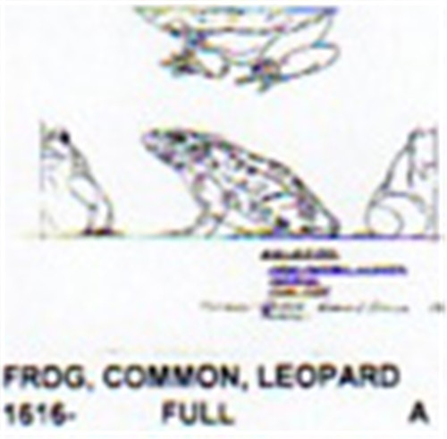 Carving Pattern of a common frog.
